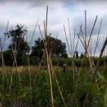 La Magalla Agroecològica, del Maresme al Vallès